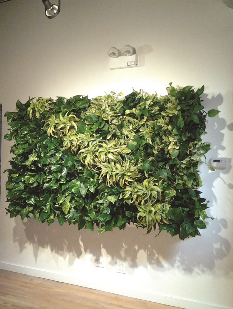 informal green wall indoors. Green Walls Can Enliven A Building\u0027s Common Area - Horticultural Art In Your Lobby The Chicagoland Cooperator, Condo, HOA \u0026 Co-op Monthly Informal Wall Indoors O